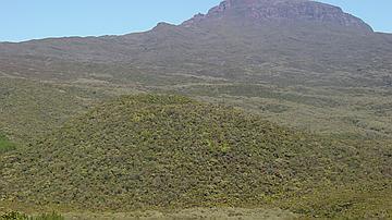 Vue de la forêt de Bébour
