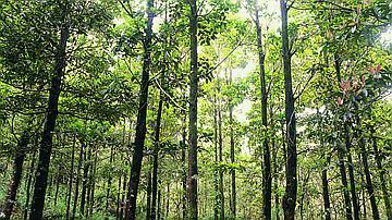 Cette forêt de Bois de couleurs abrite des espèces uniques au monde