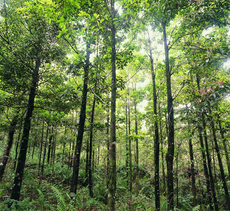 ONF Une végétation riche et singuli u00e8re # La Soissonnaise Des Bois