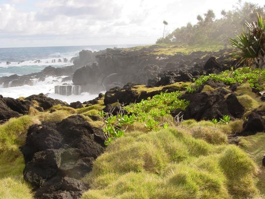 La végétation de Saint-Philippe s'est adaptée à un environnement à la fois volcanique et littoral