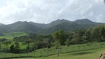 La forêt fait partie du paysage martiniquais