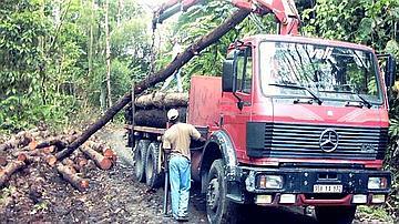 Chargement de grumes de mahogany à l'aide d'un camion grue