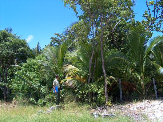 Enclos de régénération en forêt domaniale littorale (Anse Michel)