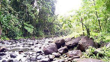 La rivière du Lorrain (Bois Crassous)