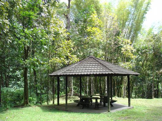 Ajoupa accessible tous publics (Forêt départementalo-domaniale des Pitons du Carbet)