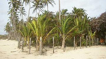 Enclos de régénération (Forêt domaniale littorale de l'Anse Michel)
