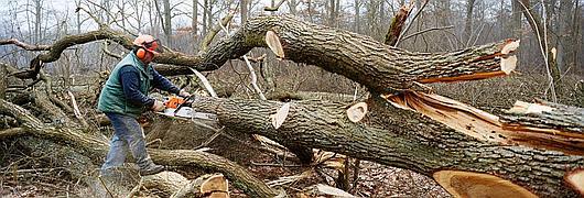 Travaux forestiers : bûcheronnage