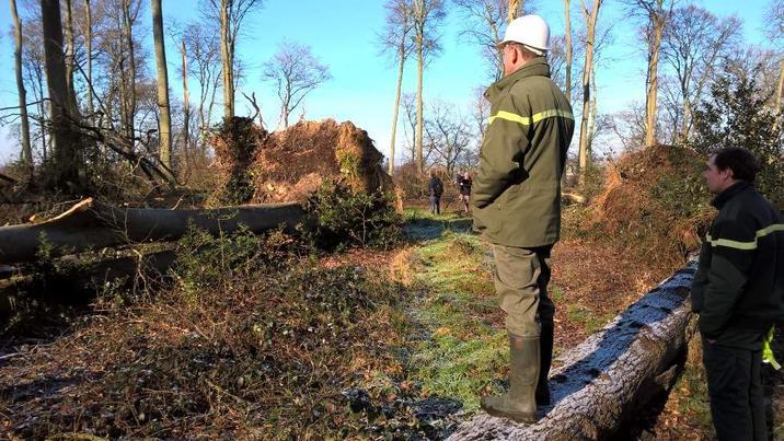 Dégâts en forêt domaniaale d'Arques suite à la tempête Egon
