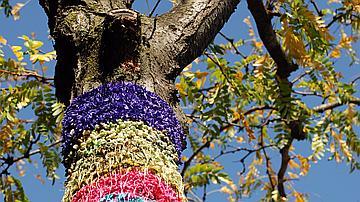 Tronc d'arbre recouvert d'un tricot.