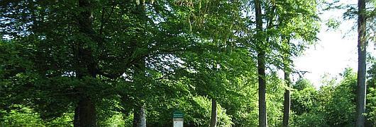 L'aire du Grand Maitre, un carrefour majeur de l'accueil en forêt de Brotonne