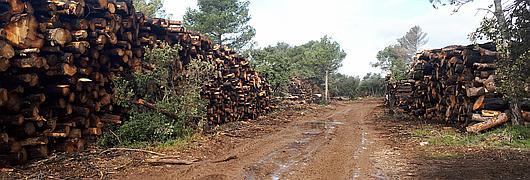 Tas de bois façonnée en bordure de piste