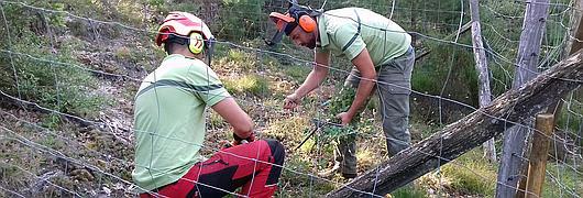 Des travaux d'entretien nécessaires pour la conservation de la Sabline à grandes fleurs.