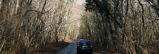 Des arbres encroués les uns aux autres surplombant la chaussée