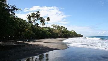 L'Anse Céron (forêt domaniale littorale de l' Anse Céron)
