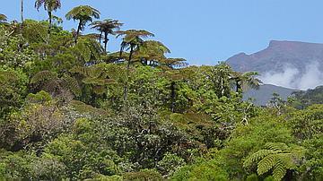 Fanjans dans la réserve biologique de Bébour