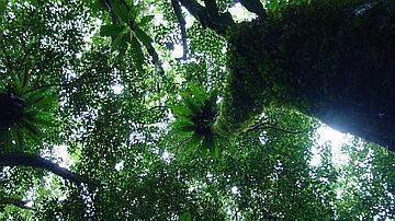 Canopée de la forêt de Bois de couleurs des Bas (Réserve naturelle de Mare Longue)