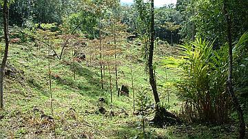 Reconquête de l'espace par de jeunes plants en forêt de Bois blanc