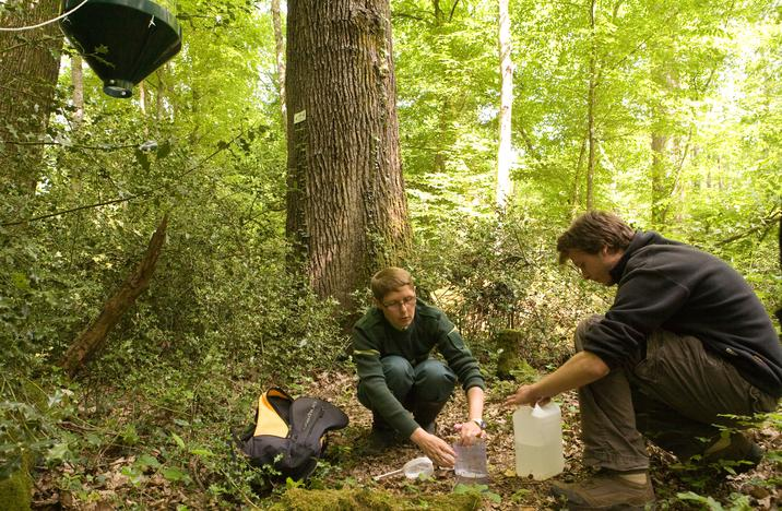 Des suivis scientifiques sont réalisés dans la réserve biologique de Nantigny