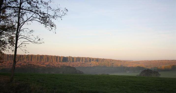 La forêt depuis Bougimont, avec vue sur l'enceinte de Pirot en lisière des parcelles 40 et 39