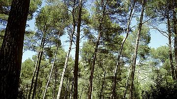 Illustration : forêt méditerranéenne