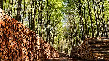 Tas de bois empilés sur les chemins forestiers.