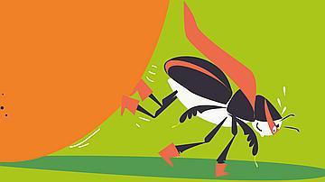 Le scarabée bousier