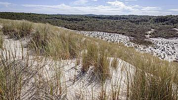 Réserve naturelle des Dunes et marais d'Hourtin.