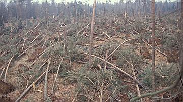 Forêt après la tempête de 99