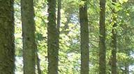 Le forestier accueille le public devant le panneau d'information à l'entrée de la forêt