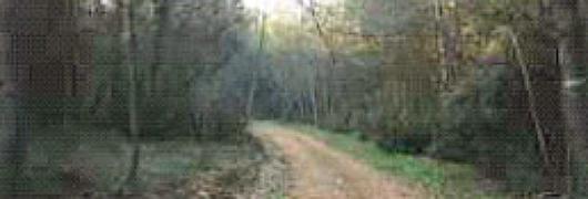 Une forêt de pins d'Alep, typiques de la végétation méditerranéenne, recouvre le versant est de la colline