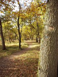 Un sentier en forêt de Fontainebleau