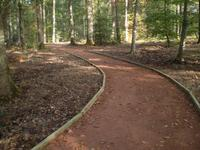 Une vue du parcours en forêt