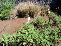 """Le """"Jardin des plantes aromatiques"""" vous fait découvrir les bienfaits de ses plantes"""