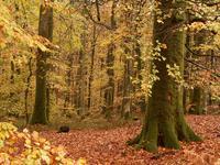 La forêt domaniale d'Ecouves