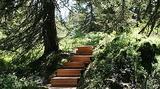 Le sentier sur caillebotis assure une promenade agréable et respectueuse de la flore des milieux humides