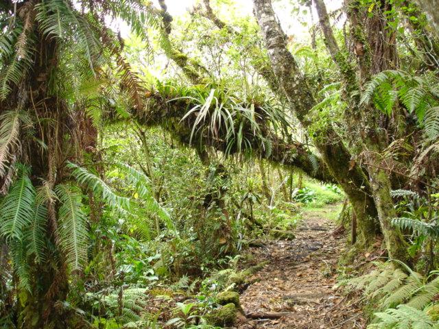 Le sentier de Piton Bébour permet un accès direct aux trésors de la réserve biologique