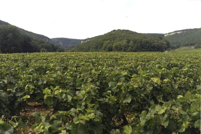 Le prestigieux vignoble de Bourgogne s'épanche sur les premiers flancs des Côtes de Nuits-Saint-Georges et de Beaune, jusqu'en limite des forêts communales des hauts de coteaux et du plateau