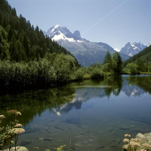 Forêt communale de Chamonix, col des Grands Montets (Haute-Savoie)