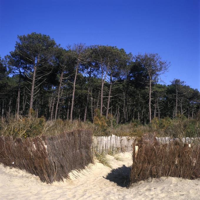 Forêt domaniale de La Teste (Gironde)