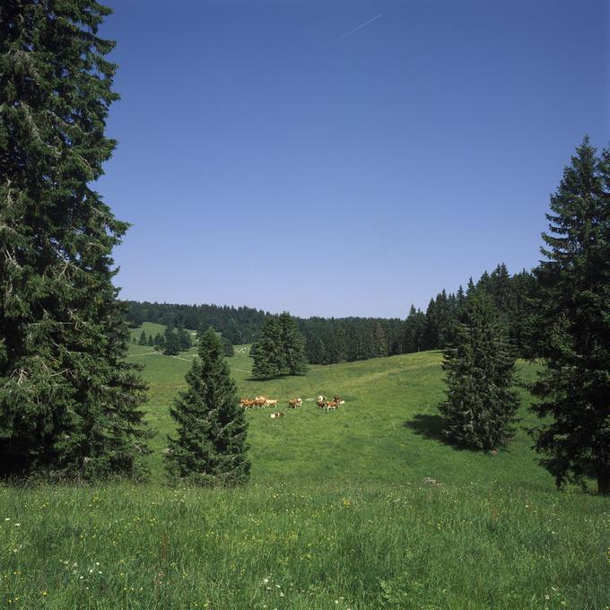 Pré-bois du massif jurassien (Doubs)