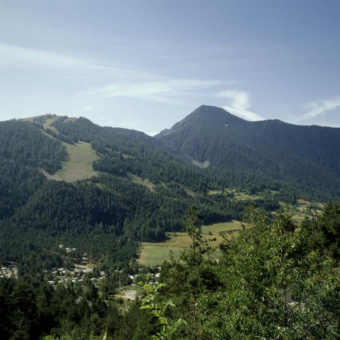 Forêt mélangée d'épicéas et sapins dans l'arrière-pays niçois, près de Saint-Martin-Vésubie (Alpes-Maritimes)