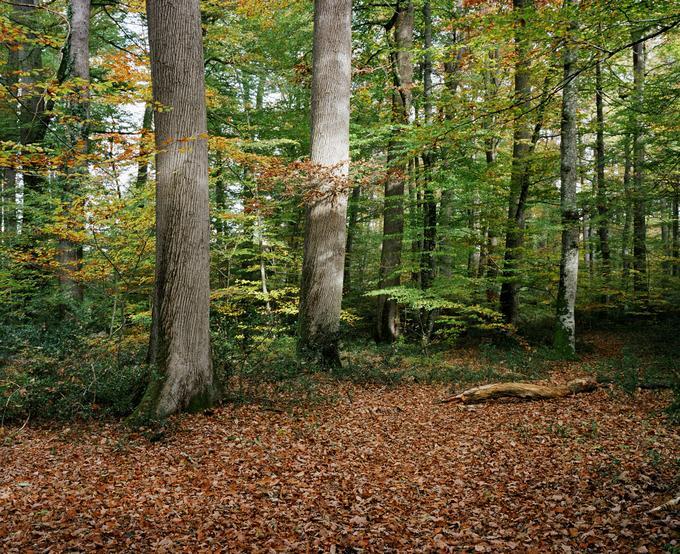 La forêt domaniale de Tronçais, histoire d'une futaie unique (Allier)