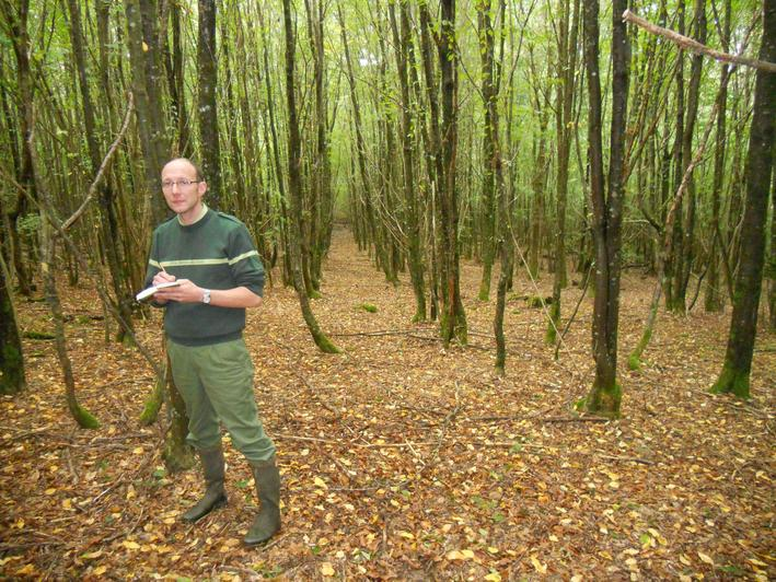Ce jeune peuplement de chêne âgé de 30 ans comprend près de 5000 tiges à l'hectare. C'est trop dense et il doit faire l'objet d'une première éclaircie