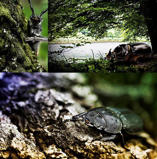 Quand les insectes sortent du bois ...