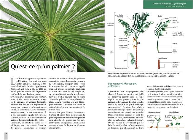 Extrait du guide des palmiers de Guyane : présentation générale (p.18 et 19)
