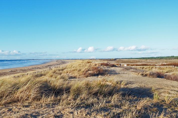 Les dunes : une succession de milieux à préserve