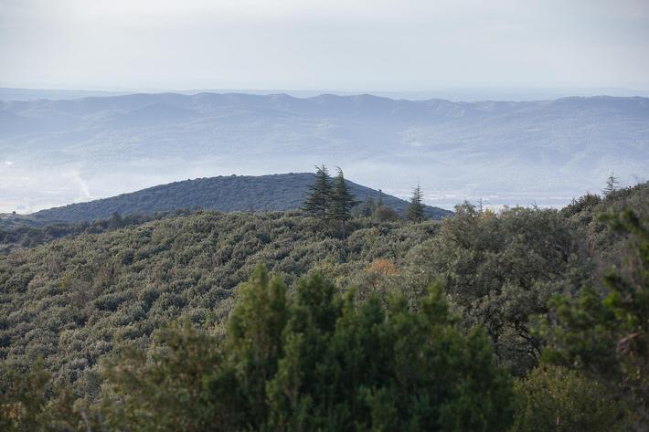La forêt des cèdres du Petit Lubéron (Vaucluse) s'apprête à accueillir un étrange ballet. Il est en effet temps de récolter les cônes de cèdre. Une opération délicate qui fait appel au savoir-faire de grimpeurs.