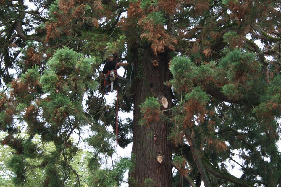 onf d montage et abattage d 39 arbres dangereux proximit d 39 un b timent. Black Bedroom Furniture Sets. Home Design Ideas