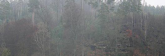 Parcelle 299 de la forêt domaniale de Hanau III