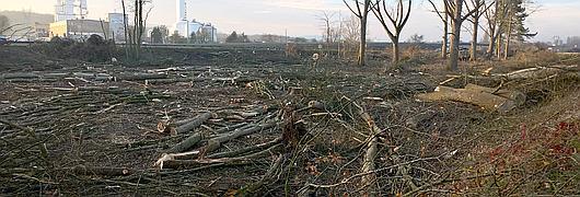 Vue dégagée de l'autoroute après exploitation des bois